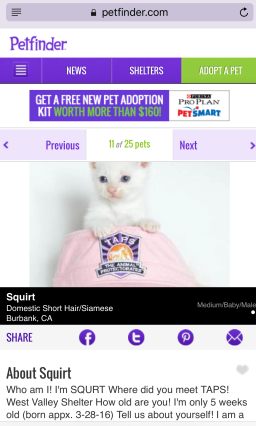Squirt on Petfinder
